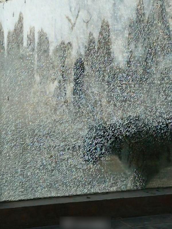 河南的商丘動物園內的老虎園近日有玻璃遭民眾不慎打裂,但園方卻未因此封閉該處(圖擷自澎湃新聞)