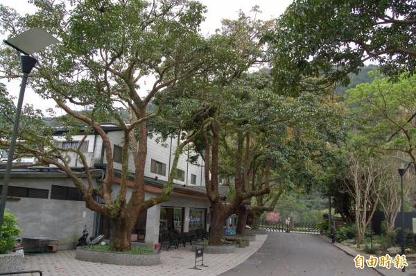 受到瑪莉亞颱風影響,大板根森林溫泉酒店全館200多間房,退到只剩1、20間,退房率高達9成。(資料照)