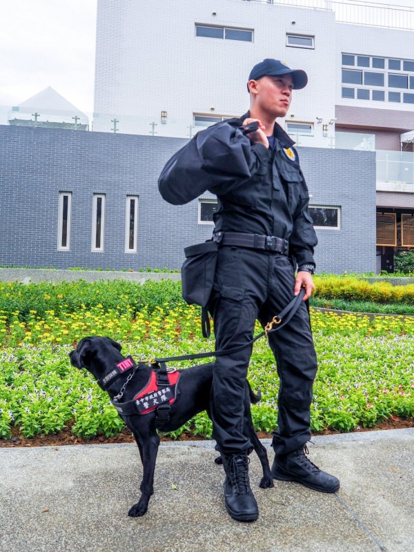 看到警犬值任務的帥氣模樣,也不要隨便去打擾喔。(台中市政府警察局警犬隊提供)