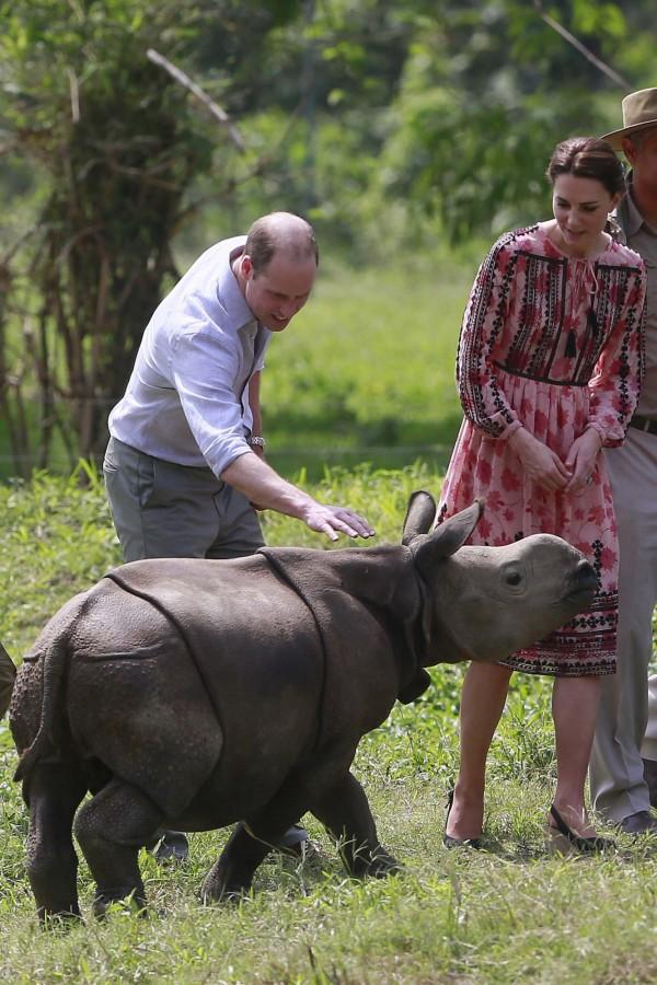 威廉王子與犀牛近距離接觸。(美聯社)