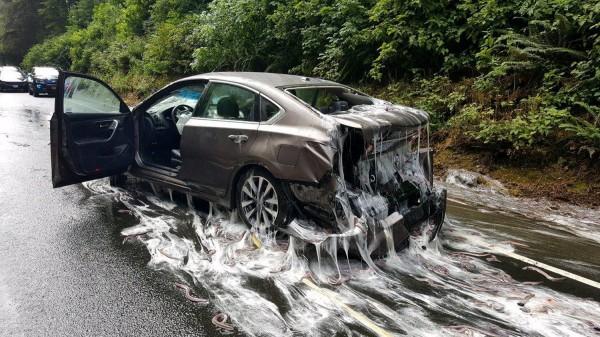 車子被盲鰻的黏液包覆。(路透)