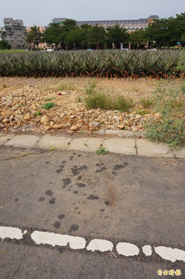 1隻流浪犬上月16日被毒死,民雄鄉三興村神農路的現場經過近1個月,地上仍殘留農藥殘漬。(記者曾迺強攝)