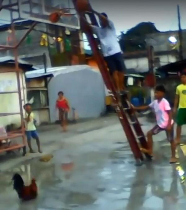 只見影片中,一名菲律賓人在籃框旁將籃球高舉,這隻超級鬥雞隨即向上躍起,並成功以「空中接力」的方式「灌籃」。(圖擷自影片)