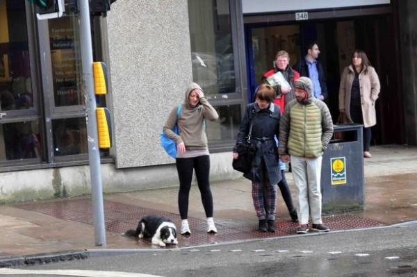 牧羊犬再按下紅綠燈桿自助按鈕後,先乖乖趴在人行道上等紅燈。(圖取自英國dailyrecord)