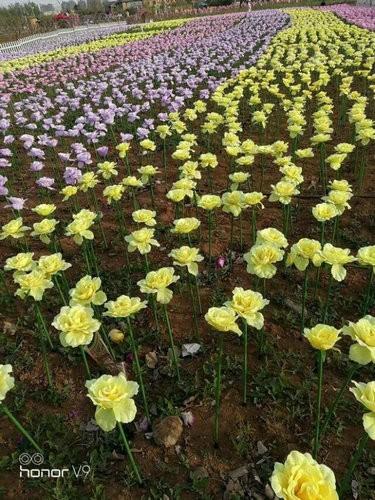 遊客踢爆,花了60元人民幣(約280元新台幣)入場後發現,大部分都是塑膠製成的假花。(圖取自微博)