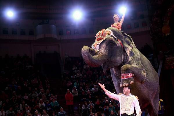 美国纽泽西州日前通过诺西法案,宣布禁止在游行、马戏团、嘉年华等各项活动中,利用野生动物进行表演。(法新社)
