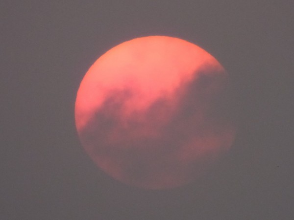 今(29)日台中的天空驚見「血日」!白天的太陽如同月亮的情形,由台灣生態學會理事長楊國禎老師所捕捉,他也表示這樣的現象是「因為PM2.5」。(圖片取自楊國禎臉書)