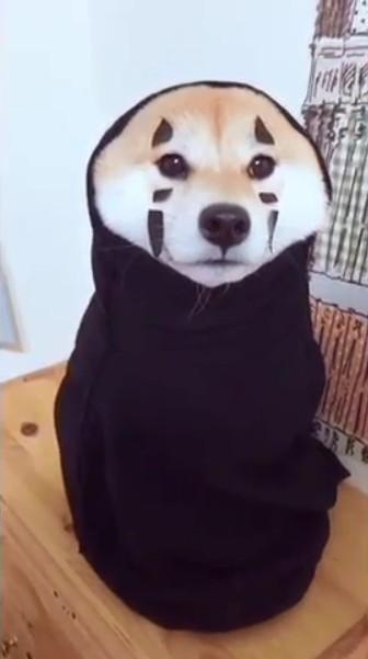網友在《爆廢公社》分享一段「無臉小狗」的影片,意外引發討論。汪星人不知所措的模樣融化了網友的心,不少人甚至喊著也想將自家的毛小孩打扮成這樣。(圖擷自yumiliu526 IG)