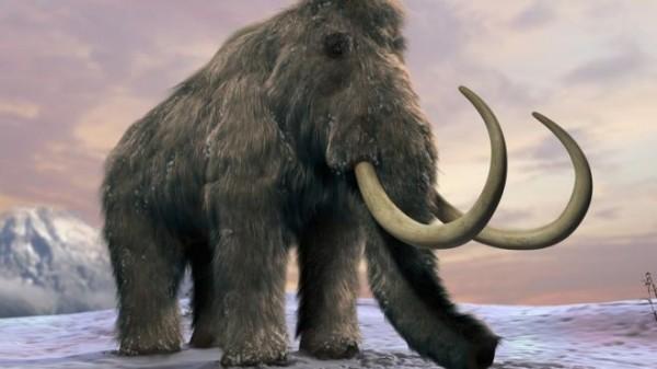 「猛瑪象」的圖片搜尋結果