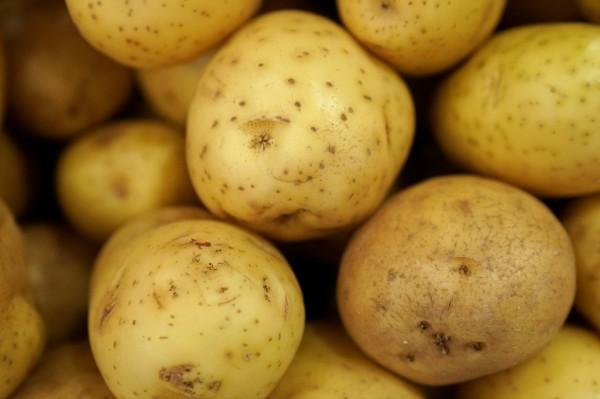基因改造馬鈴薯最快明年可能在台上市。(路透)