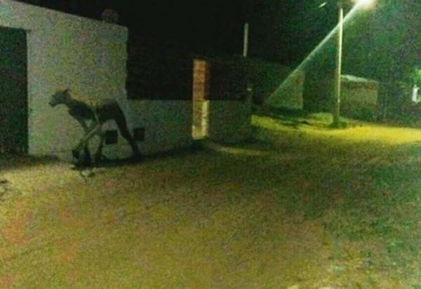 阿根廷驚現4肢細長的不名生物,引起網路熱議。(圖擷自YouTube影片)