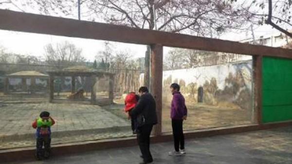 玻璃出現裂痕後仍有民眾入園參觀,不知情的人若沒細看也很難發現此事。(圖擷自澎湃新聞)