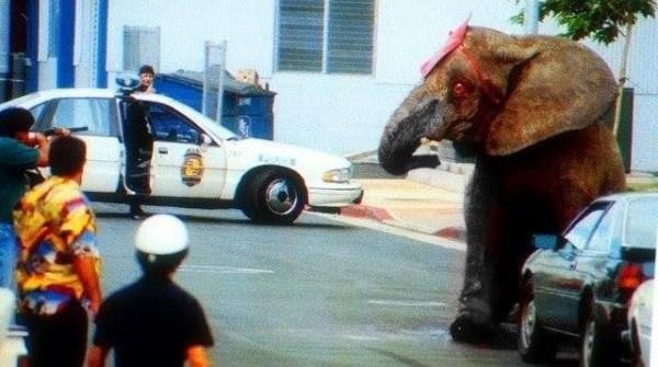 1994年8月20日,大象泰克不滿自己被虐長達12年,表演中怒踩死馴獸師,在投奔自由的30分鐘後被當地警方狂轟上百槍,臥倒在血泊中死去。(圖擷取自影片)
