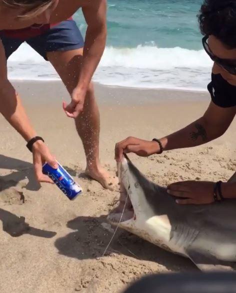 美國一群屁孩把擱淺的鯊魚當作開罐器,敲向鯊魚的牙齒開啤酒喝。(圖擷自Instagram)