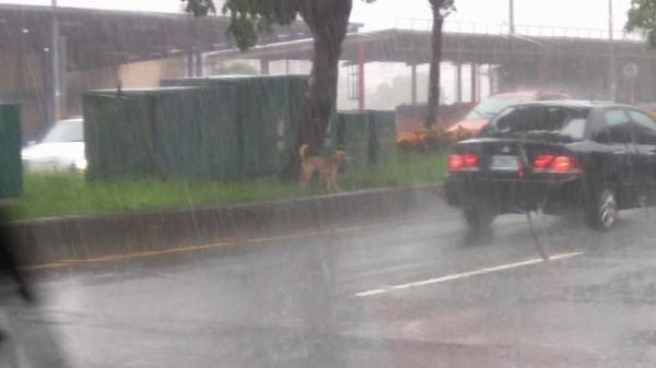 宜蘭地區上午雨勢大。(圖擷取自宜蘭知識+)