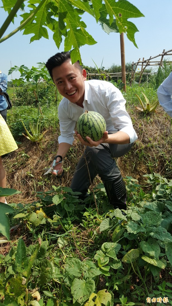 新竹市長林智堅採收西瓜。(記者蔡彰盛攝)