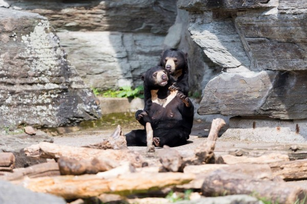 德国科隆动物园收到鉅额捐款,让园长一度以为是诈骗。(图取自Kölner Zoo脸书)
