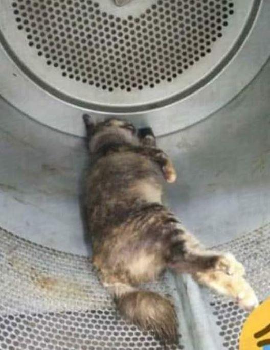 馬來西亞2名男子將貓丟進烘衣機,活活把貓烘死。(圖擷取自東方日報)