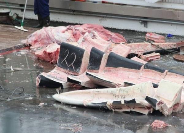 藍鯨被冰島捕鯨公司獵捕,慘變肉塊待售。(圖擷自Sea Sheperd)
