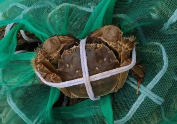 陽澄湖大閘蟹備受老饕喜愛,中媒 最近爆料市場上9成9都是冒牌貨。(翻攝資料照)