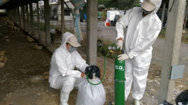 土雞場染禽流感示意圖。(資料照,屏東縣政府提供)