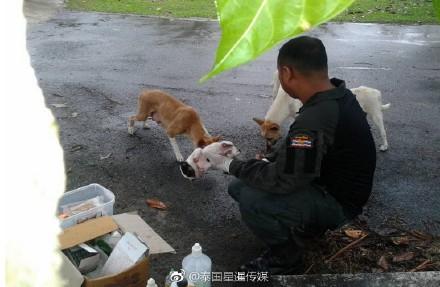 警方幫小狗包紮。(圖取自星暹傳媒微博)