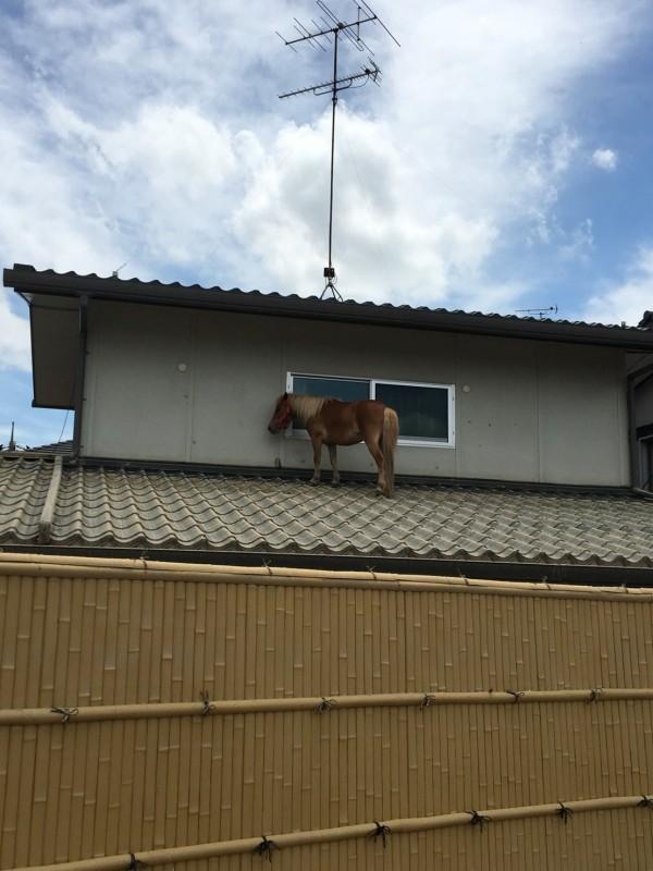 失蹤3天的「馬醫生」,在屋頂上被發現。(路透)