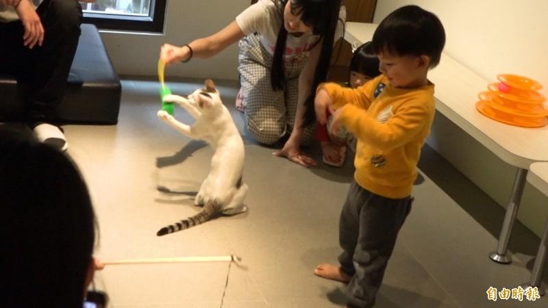 在貓中途餐廳吃飽喝足後,還可以用逗貓棒與貓來個「飯後運動」追逐賽。〔記者林佳儒攝〕