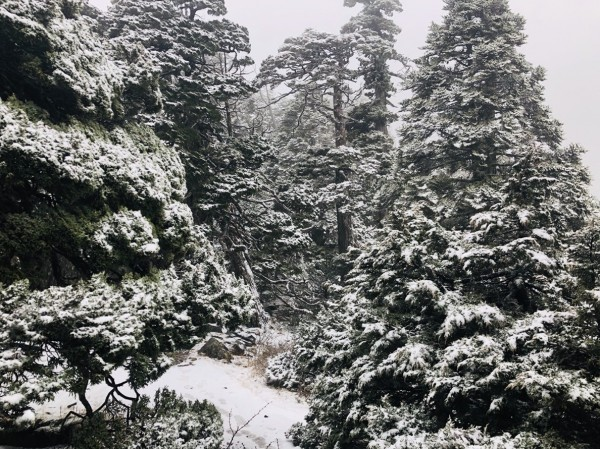 雪山今早也迎來今年首次降雪。(圖由雪管處提供)