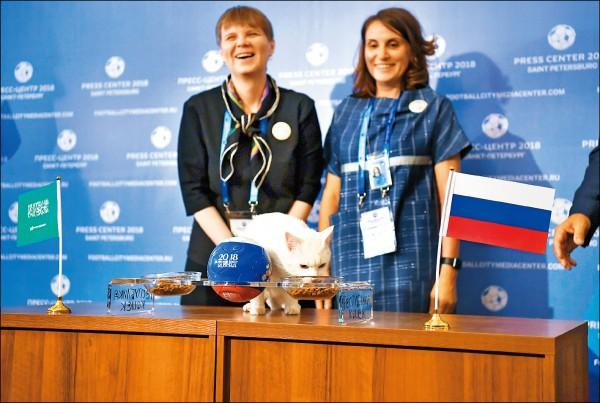 俄羅斯世足賽請來藍眼白毛聾啞貓「阿基里斯」