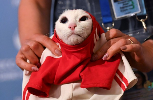 俄羅斯推出神貓「阿基里斯」,為世足賽做預測。(路透)