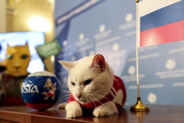 阿基里斯針對開幕賽做出選擇,預測俄羅斯將獲勝。(歐新社)