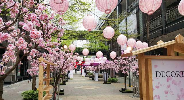不用出國!夢幻櫻花音樂祭竟然就在信義區
