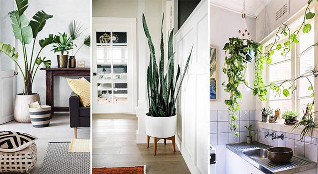 髒空氣讓你的眼睛癢不停嗎?這5種超會吸「毒」的植物一定要種在家裡