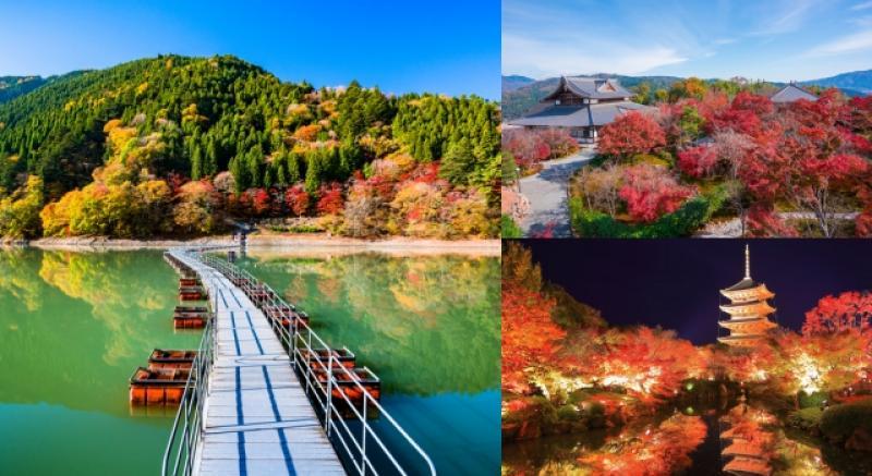日幣貶值想出國趁現在!推薦5大日本在地人最愛「賞楓必去」景點!