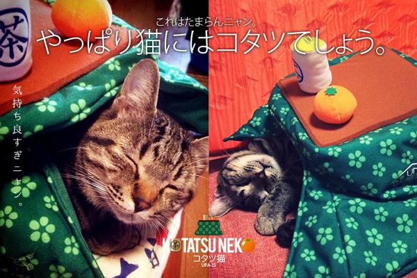 貓奴冬季必敗!日本 UNIHABITAT 推出萌度破表貓用暖爐