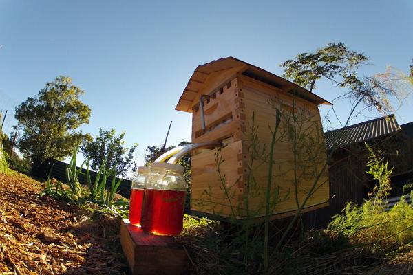 鮮採鮮釀!神奇人工蜂巢 讓採蜂蜜像開水龍頭一樣簡單