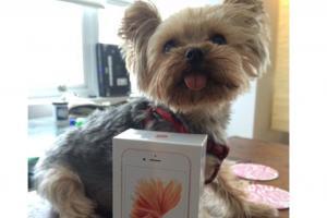 iPhone 6s 玫瑰金開箱! 第一件事先測跑分?