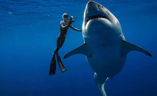 史上最大大白鯊 潛水員目擊啃著抹香鯨
