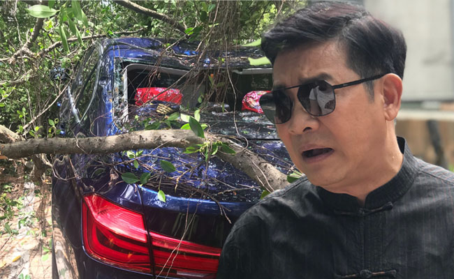 大樹壓垮百萬車 楊慶煌︰市長看到沒?