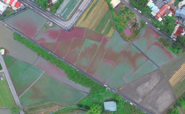 血流成河!三星鄉4公頃土地全被汙染