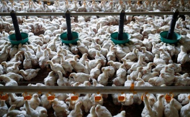 缺肉危機!北京急終止對美家禽進口禁令