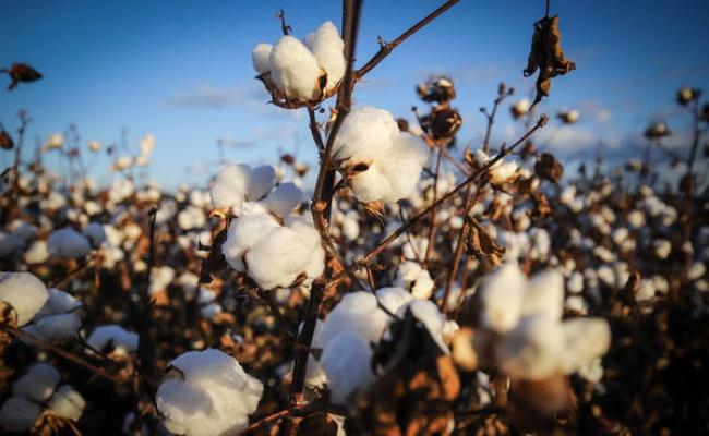 美禁新疆棉花 行業組織稱不會全面封殺