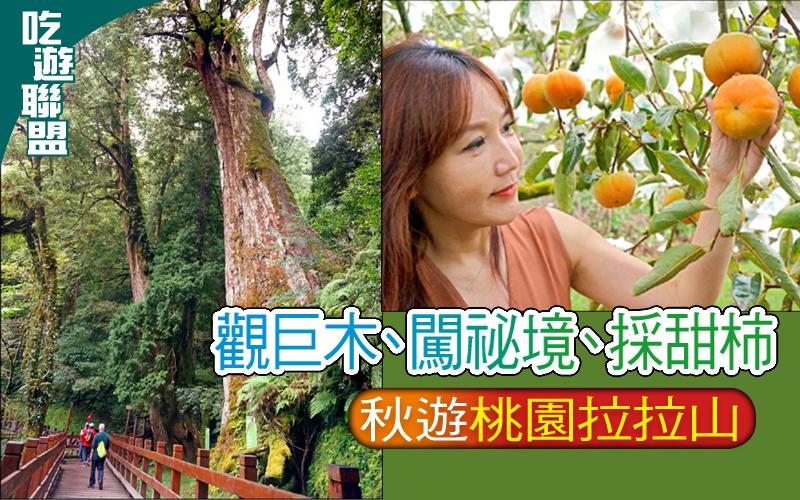 【吃遊聯盟】觀巨木、闖祕境、採甜柿─秋遊桃園拉拉山