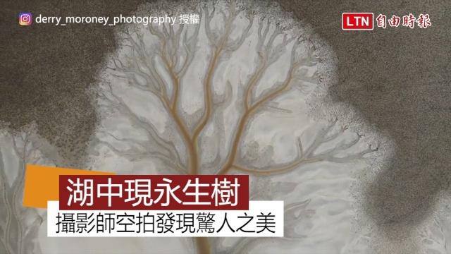 湖裡長出一棵樹? 攝影師空拍意外發現絕美景色