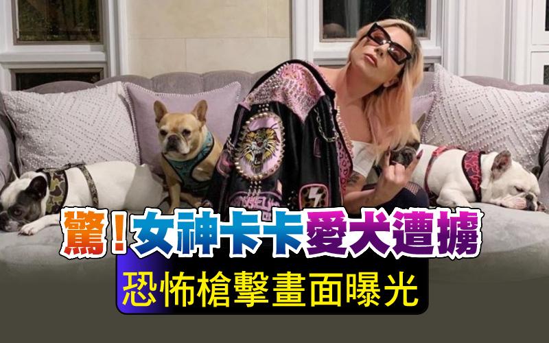 驚!女神卡卡愛犬遭擄 恐怖槍擊畫面曝光