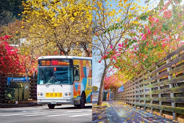 九重葛、黃花風鈴木整排環繞!網友打卡封「台中最美公車站」