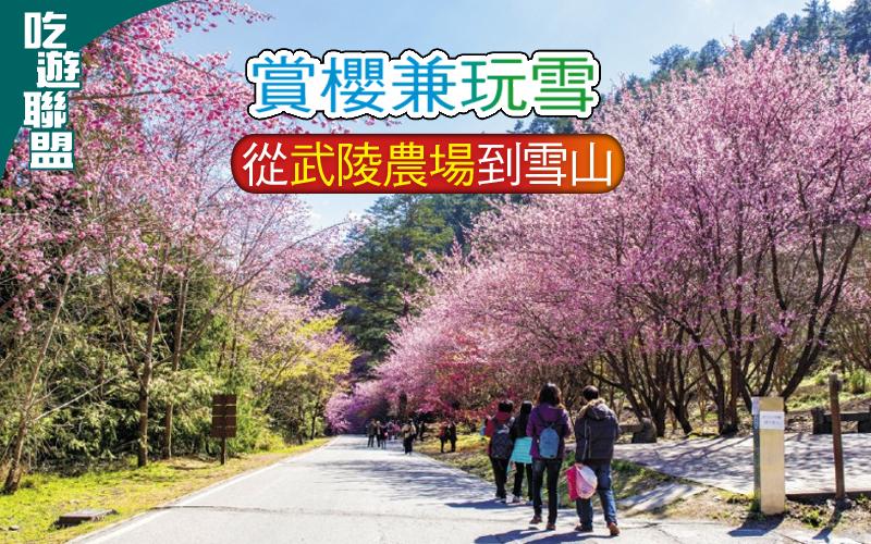 【吃遊聯盟】〈影像行旅〉賞櫻兼玩雪─從武陵農場到雪山