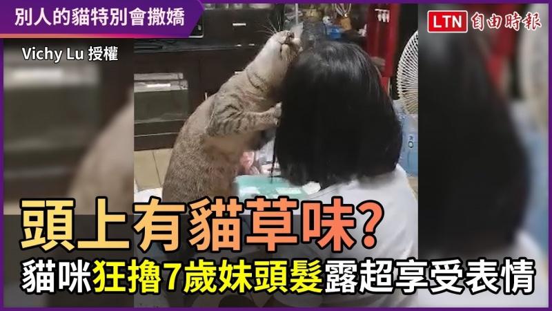 頭上有貓草味? 貓咪狂擼7歲妹頭髮 露出超享受表情