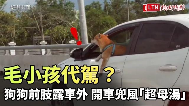 毛小孩代駕?狗頭、前肢露車外 開車兜風「超母湯」